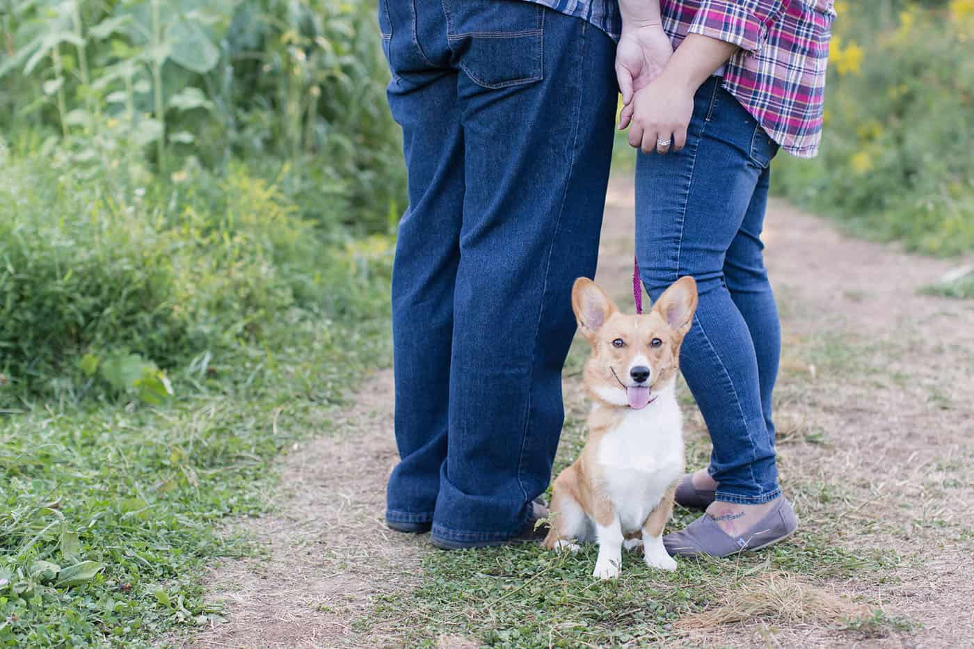 couple holding hands over their corgi puppy by customer service whiz cinnamon wolfe