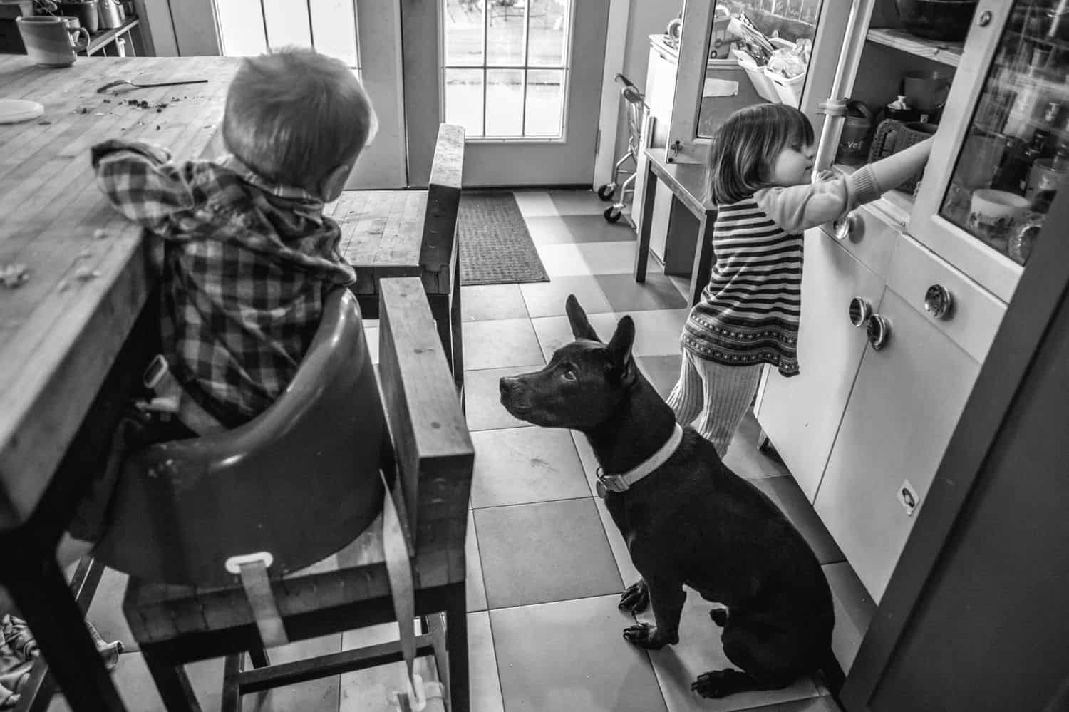 Fearless Family Photos All Have These 4 Ingredients: Lifestyle Photography - Family Dog Begging for Baby's Breakfast