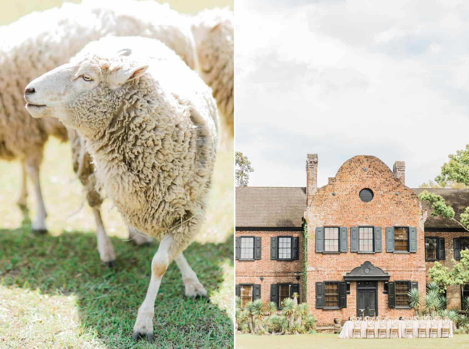 Farm Wedding with Brick Manor House and Sheep: Get Photography Clients with Styled Shoots