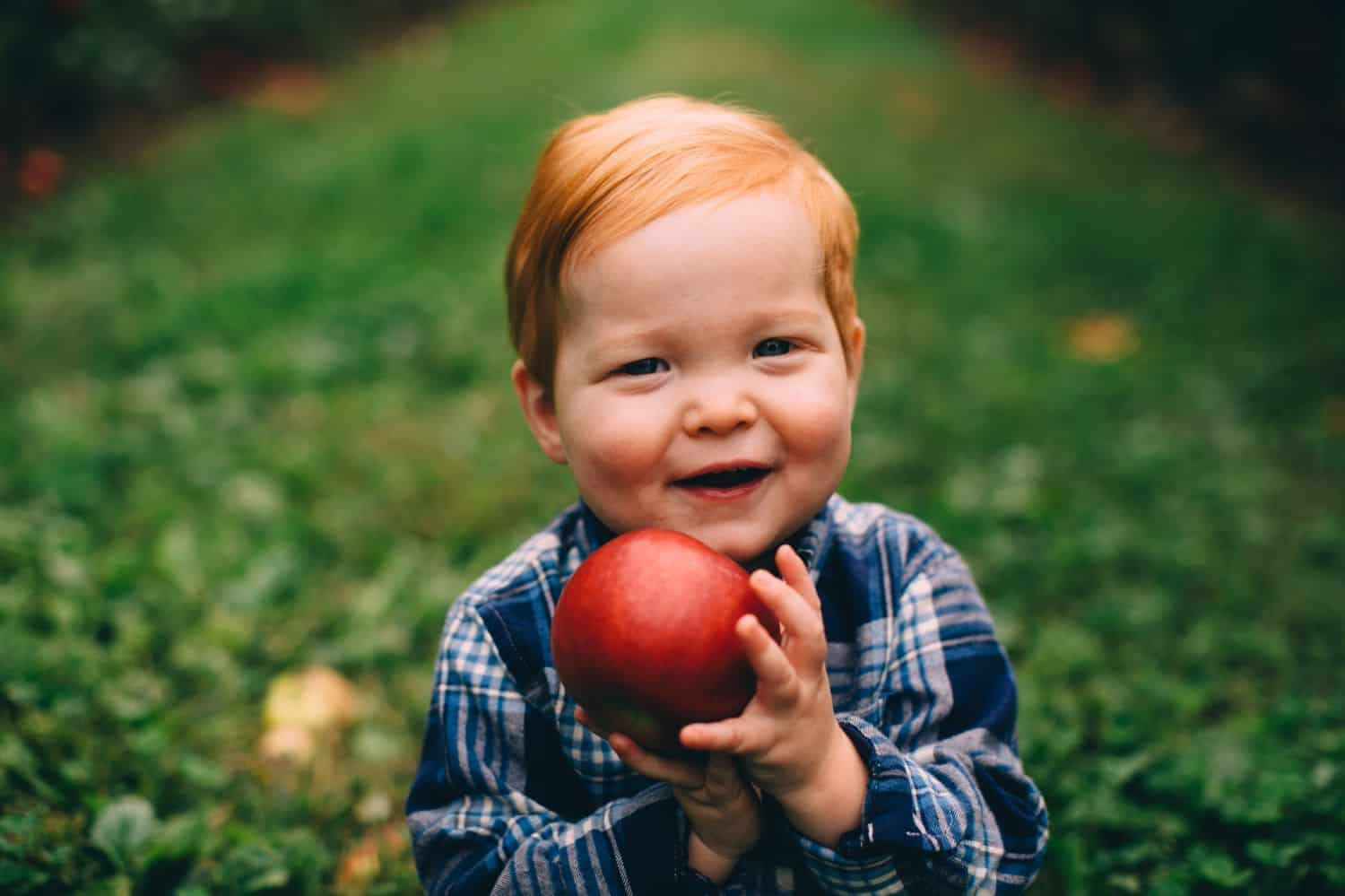 A red-haired toddler holds and apple in the middle of an apple orchard.