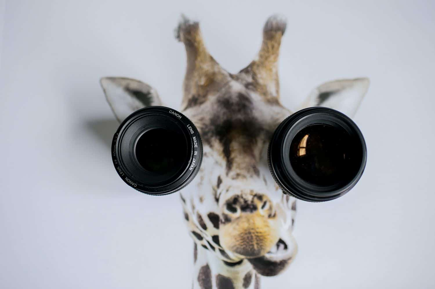 Two lenses cover the eyes of a giraffe in a painting.