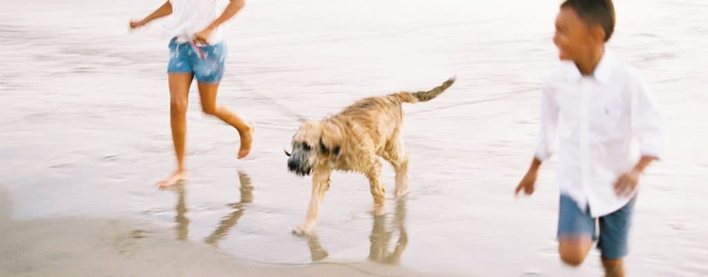 Little girl and boy run along the beach with their dog