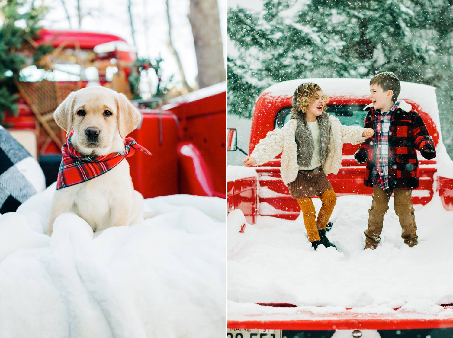 In two side-by-side photographs by Maine Tinker Photography, a red vintage pickup truck is parked in the snow. In one photo, a labrador puppy wears a red plaid bandana and sits calmly on a white blanket. In the other photo, two young kids jump about in the bed of the truck, which has filled with falling snow. Christmas Mini Session: Ideas Families will ADORE!
