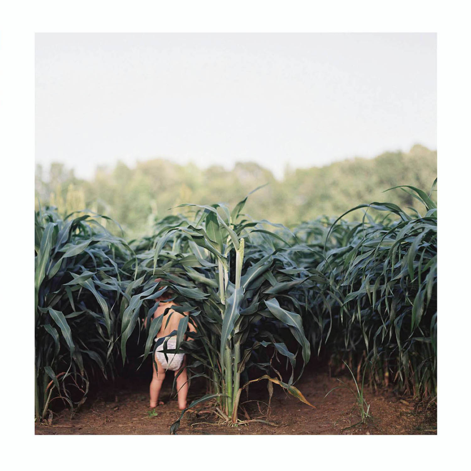 Photo: Ashleigh Coleman's photo of a toddler wearing only a diaper, wandering into a corn field