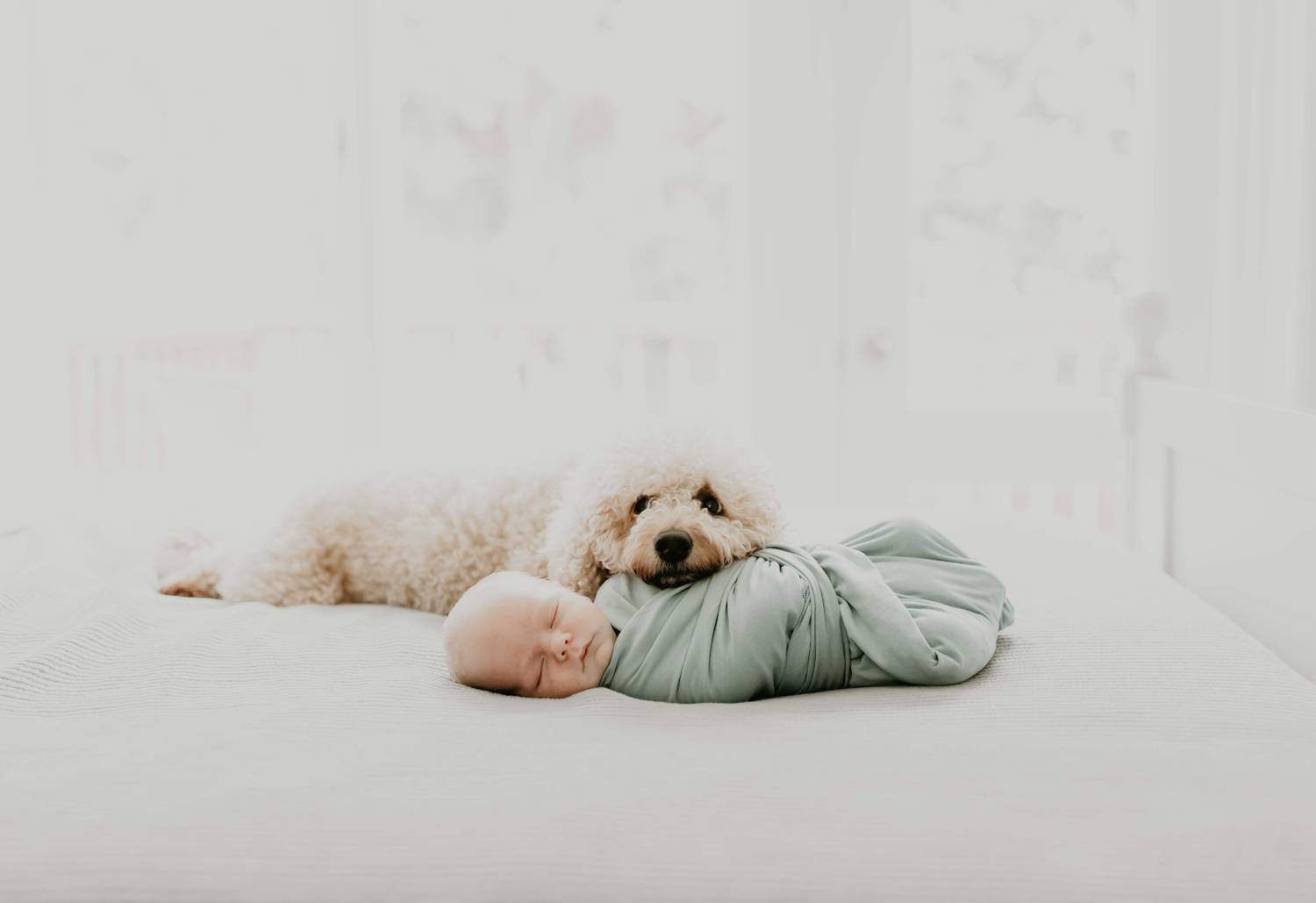 Photo: Shefali Parekh's simple, muted portrait of a newborn baby swaddled in a seafoam green cloth as a white fluffy dog rests it's head on the baby's belly.