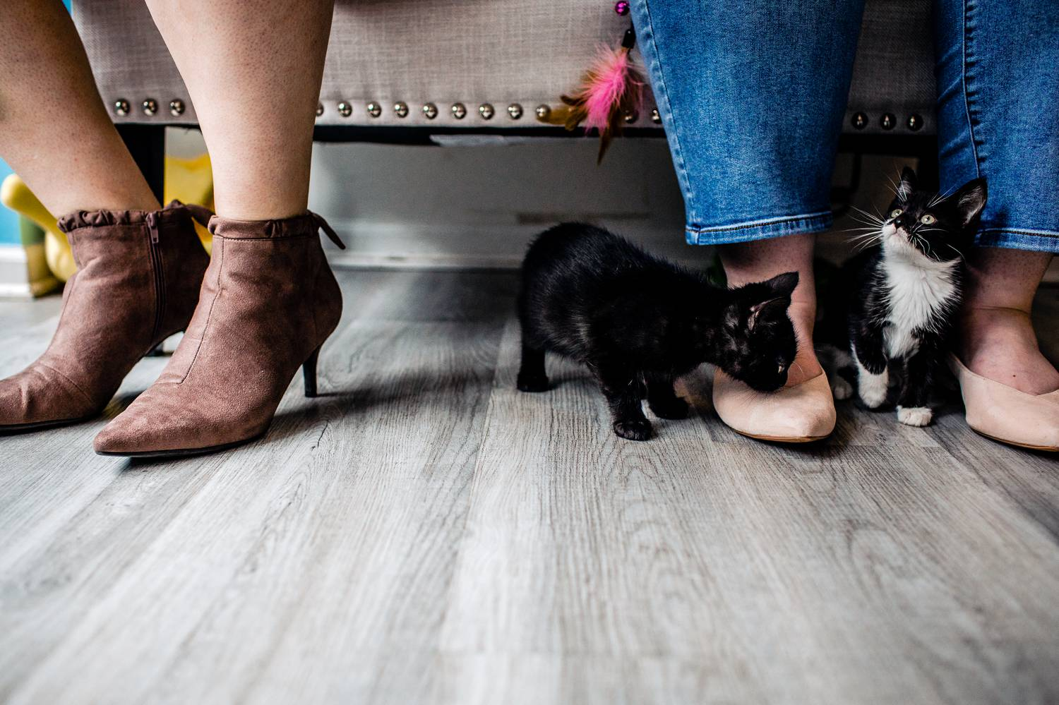 Two kittens roam around the feet of a lesbian couple in a cat cafe
