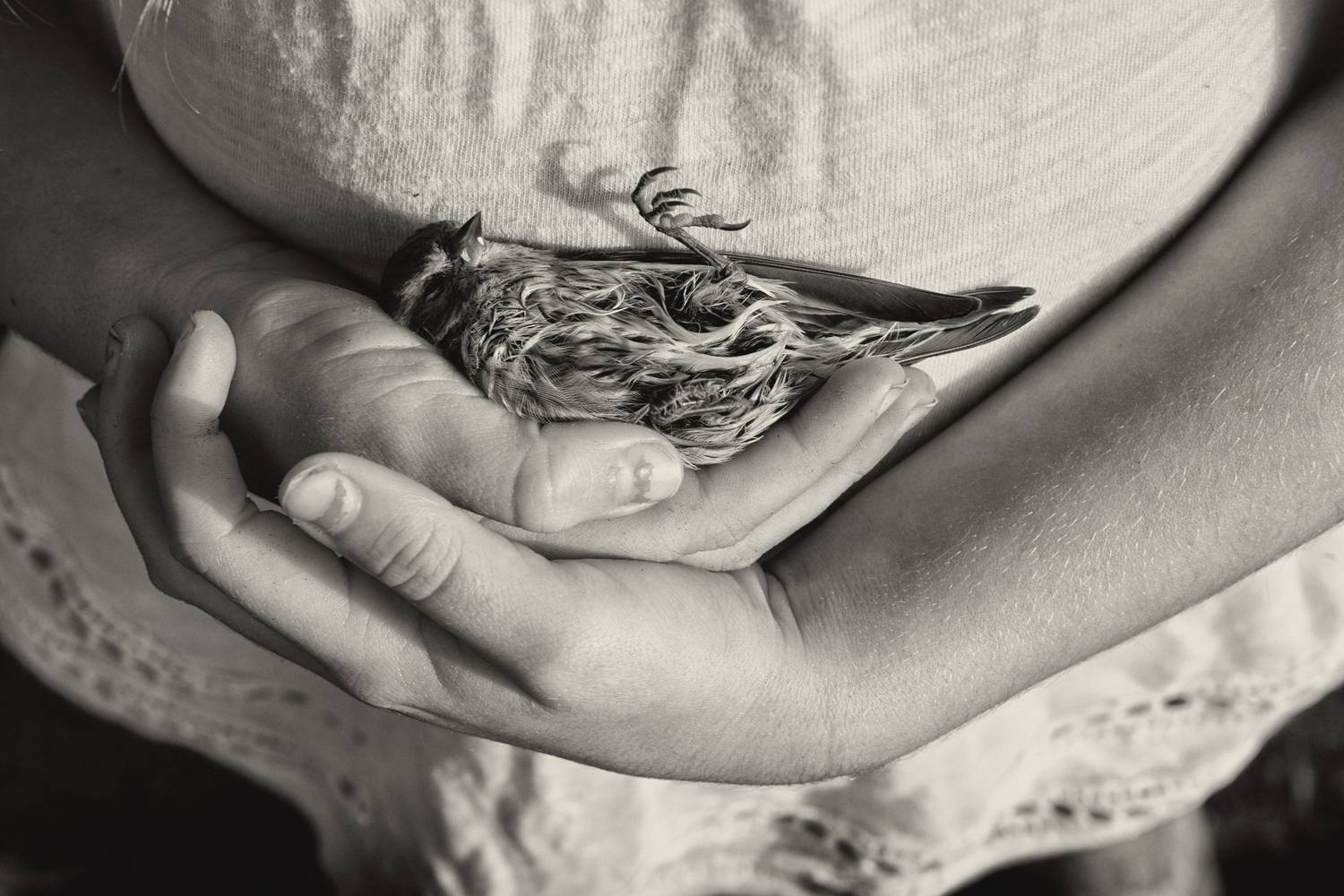 This image by Nolan Streitberger is from his series <i>Long Summer Days</i>, which follows his daughter's journey through childhood as an only child living a device-free lifestyle. The photograph depicts the little girl's hands at waist-level, cradling an injured sparrow.