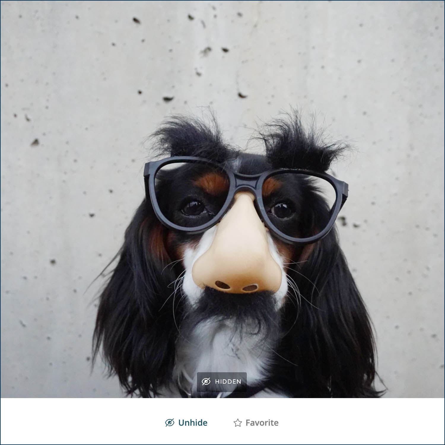 """ShootProof's """"hide"""" feature allows photo clients to hide images they want to keep private, like this silly dog portrait by Braydon Anderson"""