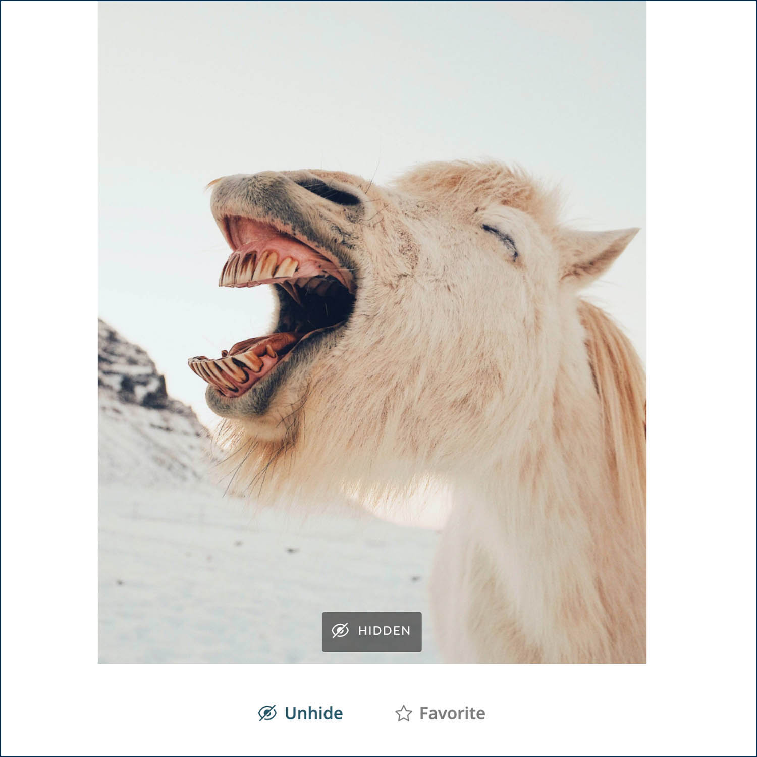 """Use the """"Hide"""" feature in ShootProof to eliminate select photos from view, like this silly horse portrait by Dan Cook"""