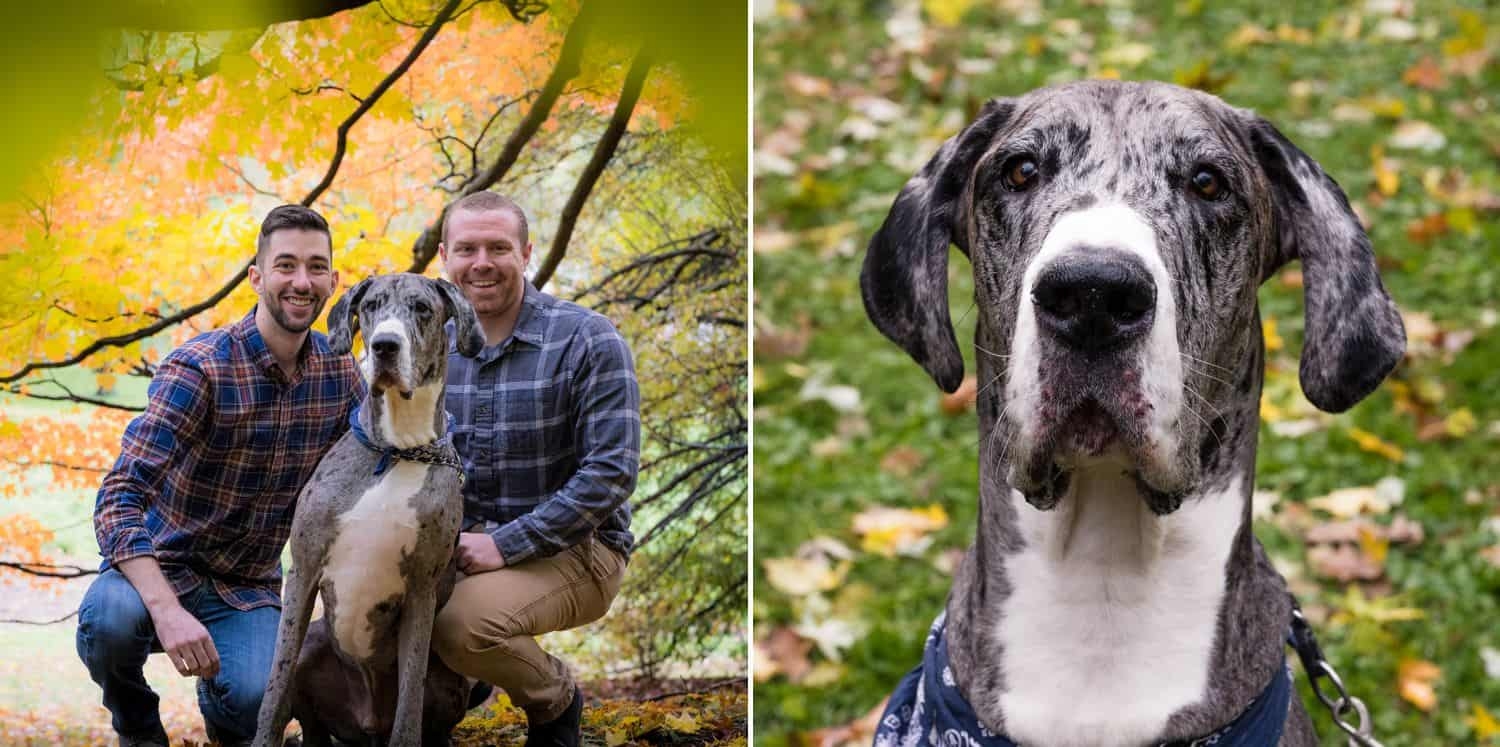 See how dog photography can enhance your portrait and wedding images. Your clients will love adding their furry family member to their next session!