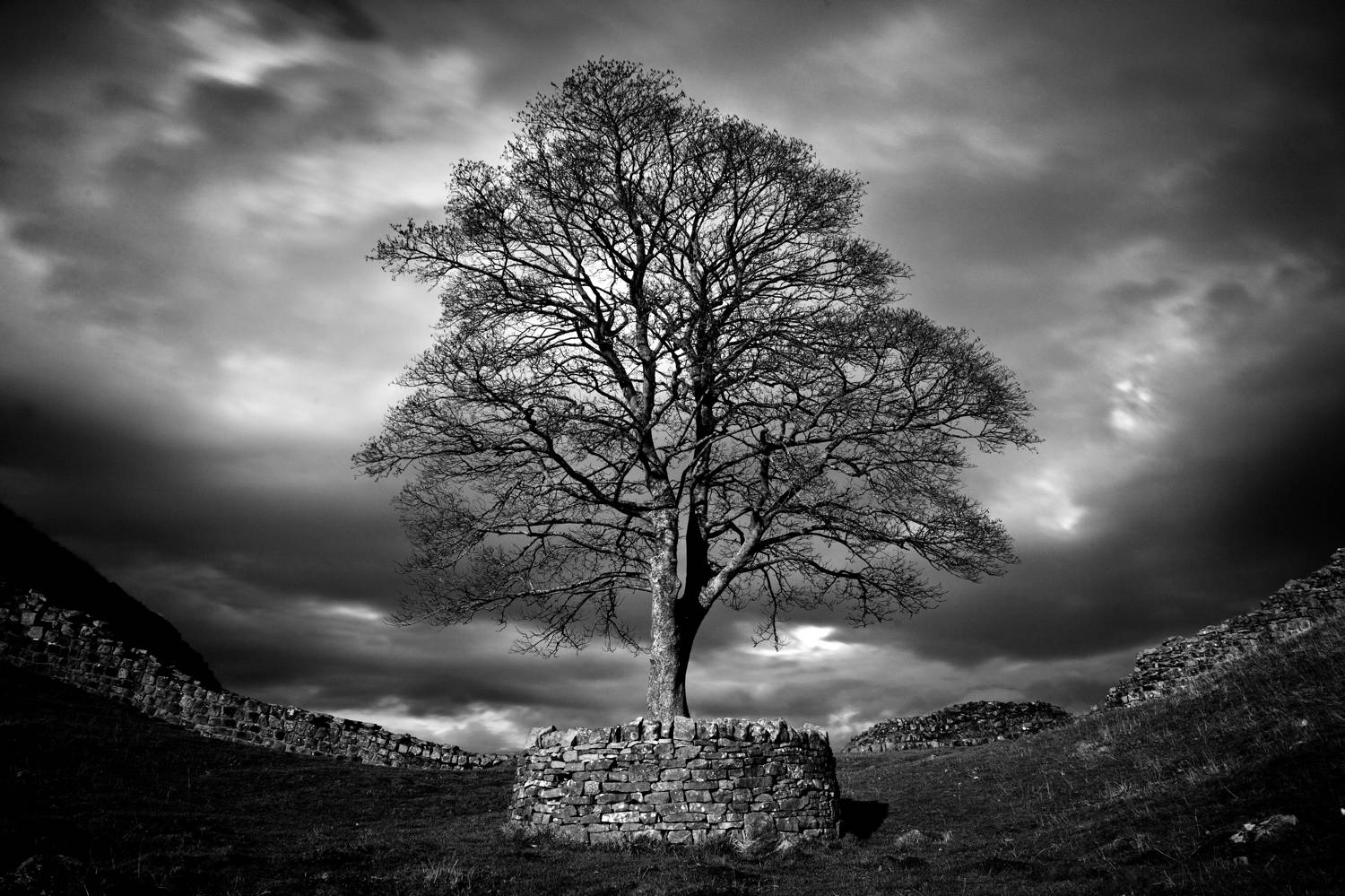 Sell fine art photography online, like this black and white image of a huge oak tree by Joshua Wyborn.