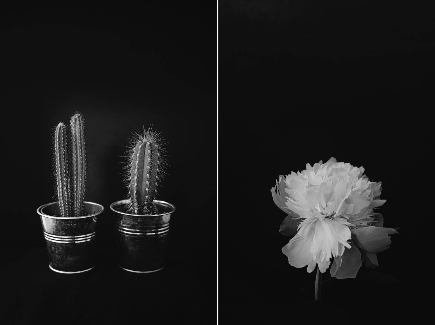 Sell fine art photography online like Joshua Wyborn, whose moody images of landscapes, flora, and fauna help him earn passive income during slower months.