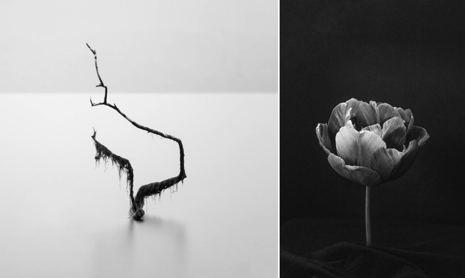 Joshua Wyborn creates fine art prints to sell online, including this ghostly image of a dead tree rising out of a pale lake, and a dim studio image of a flower blossoming against a black background.