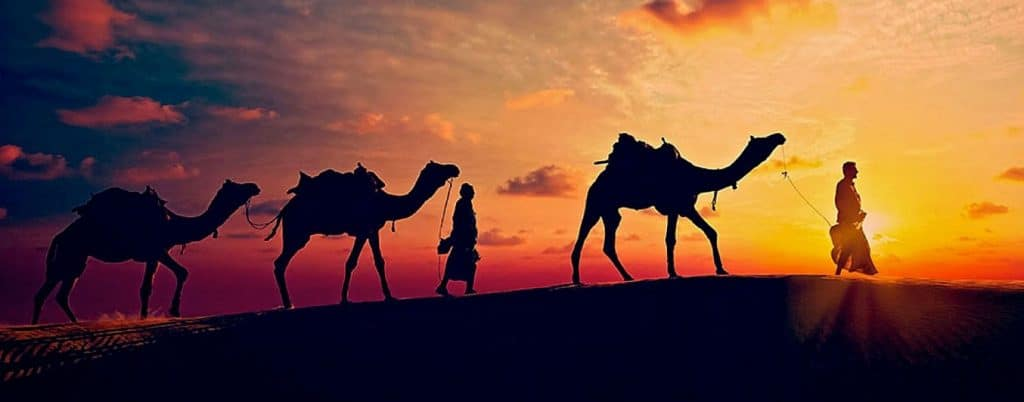 A groom walking with three camels as the sun sets in the desert